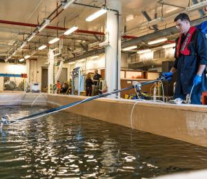 Experiments being conducted at Dalhousie University's Aquatron facility.